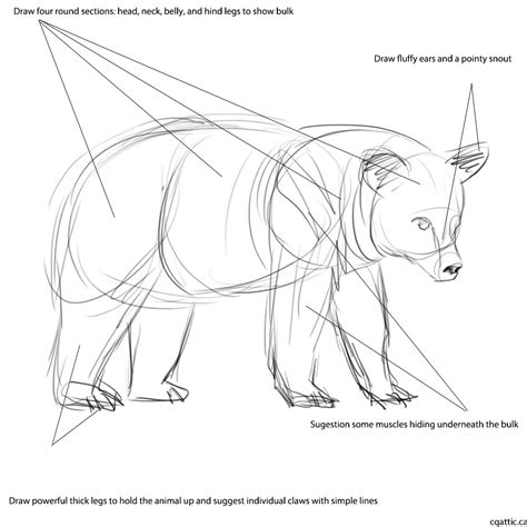 how to draw a boat with shapes realistic bear drawing in 4 steps with photoshop
