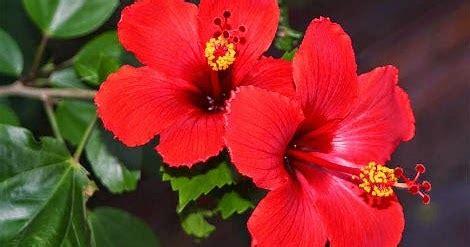 bunga sempurna  bunga tidak sempurna