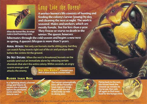 image hornet backjpg wierd nwild creatures wiki fandom powered  wikia