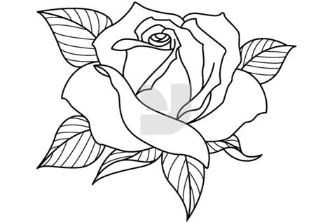 coloring pages of different types of flowers 100 different types of flowers images wallpaper