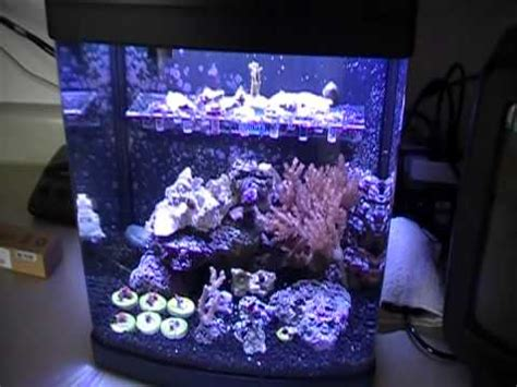 29 gallon biocube lighting upgrade tunning the biocube 14 part 1 of 3 youtube