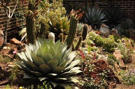 11 Best Images About Zone 5 Cactus On Pinterest Scarlet Cactus Rock Garden