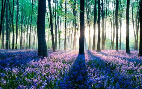 Gamis Syar I Madina Soft Purple High Quality galaxy s4 forest wallpaper hd android apps on