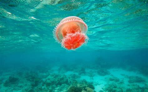 underwater themes for windows 10 jellyfish windows 10 theme themepack me