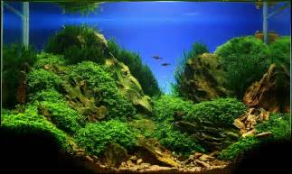 aquascaping live rock