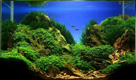 Aquascape Aquarium by Jan Simon Knispel And Aquascaping Aqua Rebell