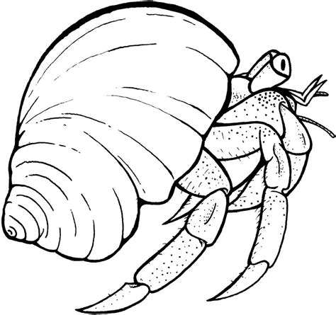 free printable hermit crab coloring pages for kids