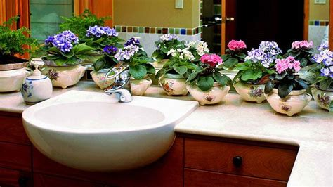 flowers for bathroom 20 tips to make indoor gardening successful lifedaily