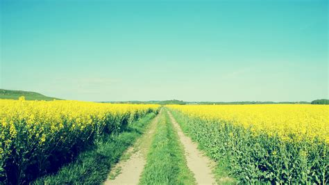 paesaggi di fiori co di fiori gialli paesaggi sfondi desktop gratis