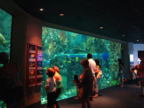moody gardens aquarium mitchell chuoke plumbing