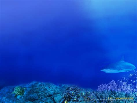 powerpoint themes underwater underwater powerpoint background christopherbathum co