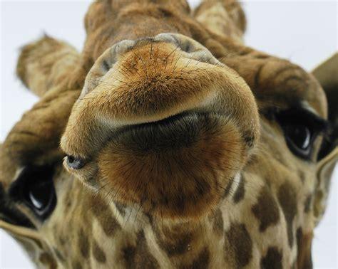 rem schlaf up animal faces smile for the pix o plenty