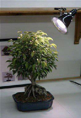 Bonsai Grow Light by Grow Light Kit Bonsai Trees