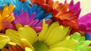 colorful flower flowers flower wallpaper flower colorful flowers