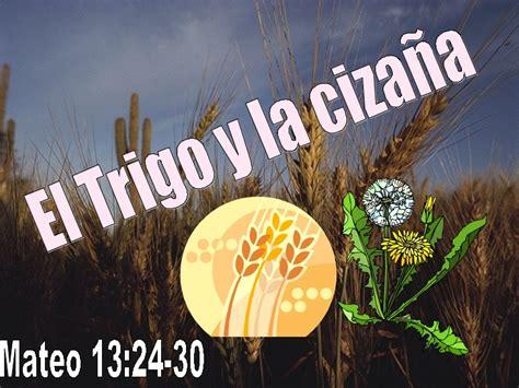 parabola del trigo y la mala hierba youtube el trigo y la ciza 241 a