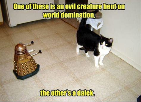 Doctor Who Cat Meme - catchy tunes and dr mew kitten thunder life lessons