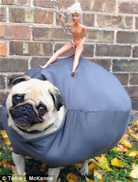 wrecking pug costume doe eyed dogs in fancy dress are of new photography book daily mail