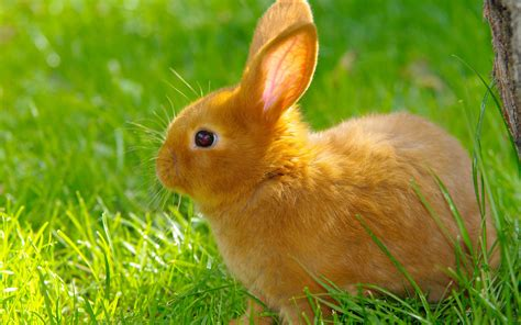 cute bunny wallpapers wallpapertag