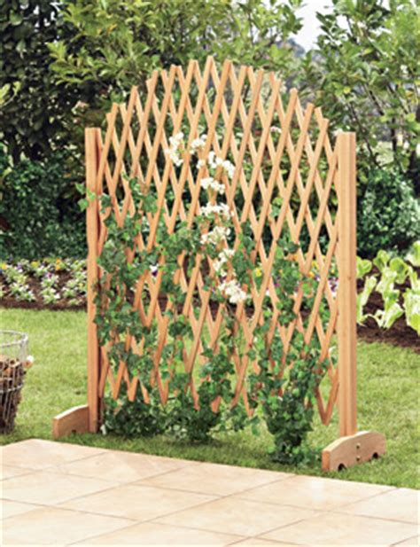 Treillis Bois Pour Plantes Grimpantes by Treillis Pour Plante Grimpante