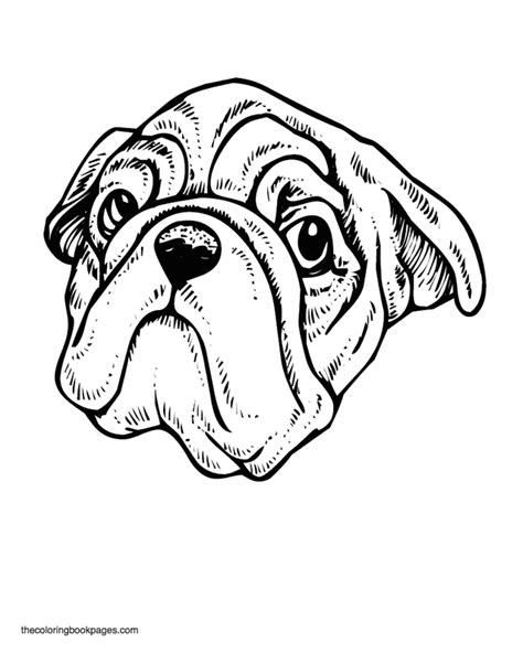 enlightened pugs coloring book books pug coloring book pages coloring home