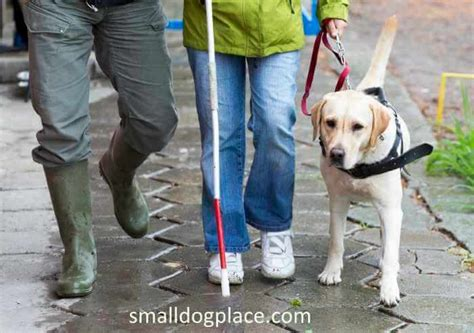 service certification requirements requirements for service dogs
