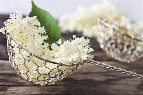 fiore di sambuco ricetta frittelle fiori sambuco i fiori in tavola non