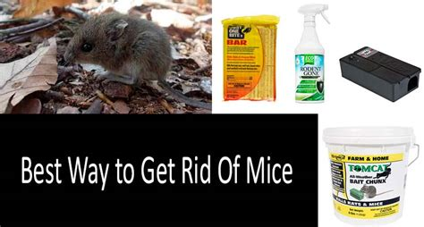How To Get Rid Of Rats In The Backyard by Best Way To Get Rid Of Mice The Best Mouse Killers And Traps