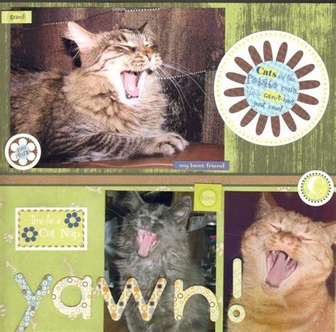 scrapbook layout cat 22 best scrapbooking cats images on pinterest