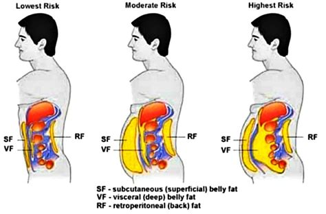 study has proven that these type of exercises quickly burn belly here are 5 of them