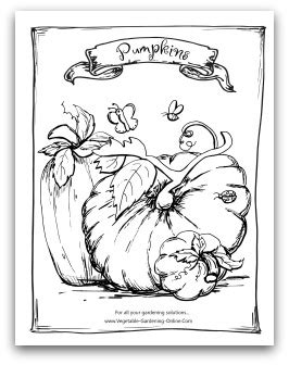 coloring pages of pumpkin seeds vegetable seed packet coloring coloring pages