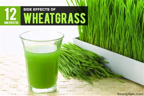 Wheatgrass Detox Side Effects by 12 Side Effects Of Wheatgrass You Should Right Now
