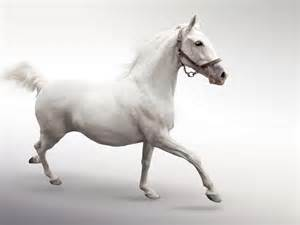 Flowers And Fun - running white horse wallpaper download wallpaper nature