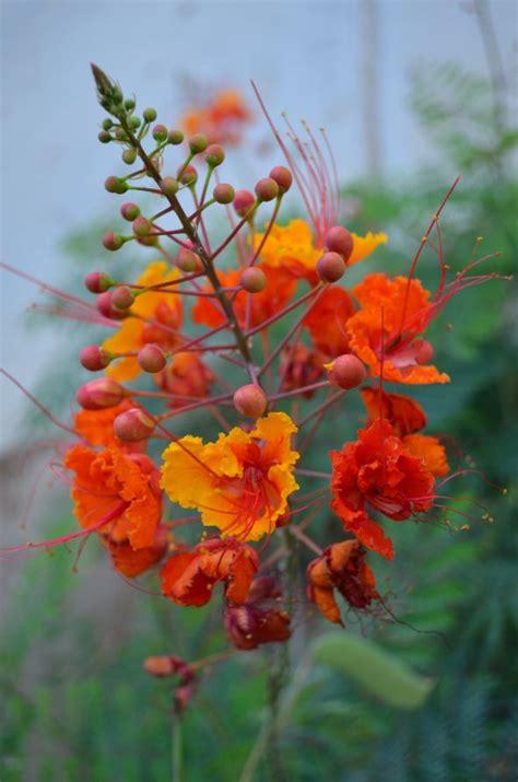 imagenes flores extraordinarias 17 mejores im 225 genes sobre flores locas en pinterest flor