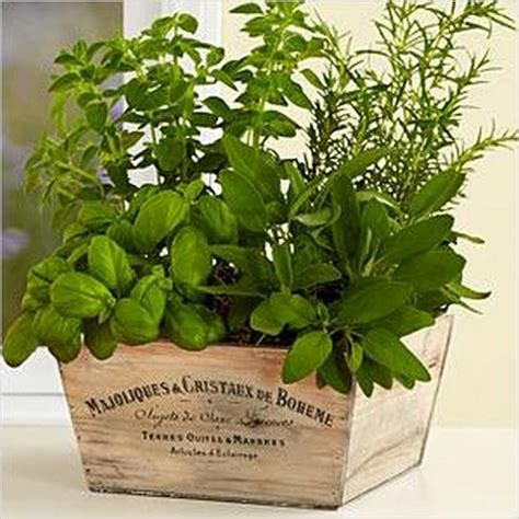 herb kitchen garden herb garden quotes quotesgram