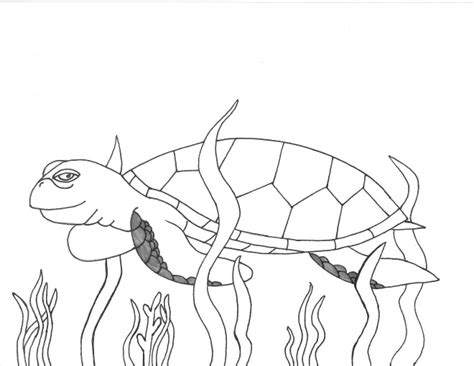 green sea turtle coloring page sketch coloring page