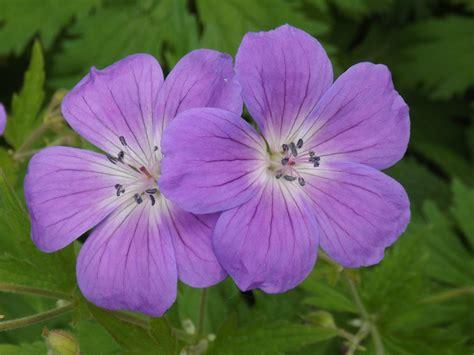The Flower blue flower 171 views through my lens