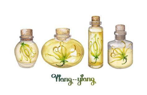 fiori di bach per insonnia oli essenziali contro l insonnia cure naturali it