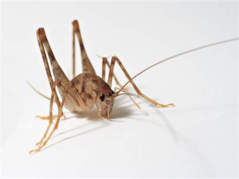 crickets enter house bathtub carpeting basement stairs remodeling decorating