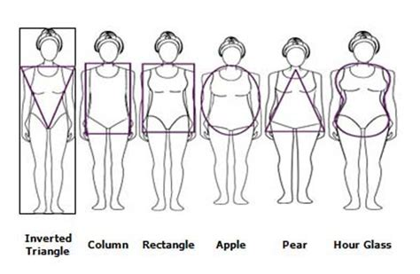body types and shapes plus size body shapes