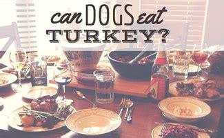is turkey bad for dogs is turkey bad for dogs caninejournal