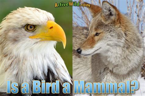 is a a mammal is a bird a mammal birds vs mammals characteristics differences similarities