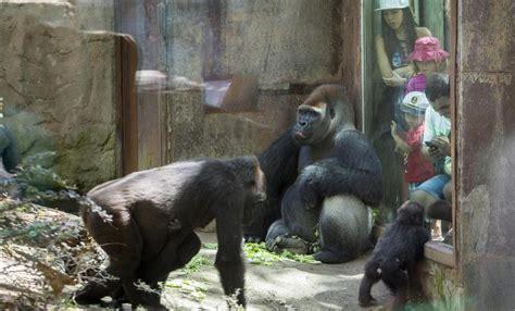 fotos animales zoo barcelona carta de una conservadora del zoo quot trabajamos para que