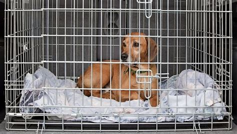 16 tips for crate training a dog effective step by step strategy