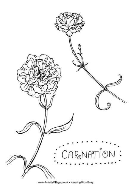 types of flowers coloring pages 17 best ideas about carnation on