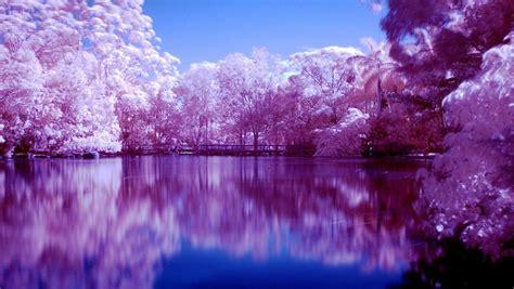 imagenes de paisajes violetas 20 wallpapers paisajes en color p 250 rpura im 225 genes taringa