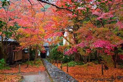 imagenes de otoño en japon fondos de pantalla jap 243 n oto 241 o 225 rboles follaje naturaleza