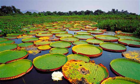 Amazonas Regenwald Pflanzen by Brasilien Viel Mehr Als Der Amazonas Abenteuer Regenwald