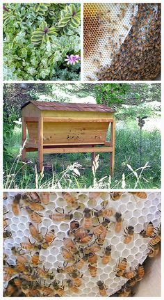 1000 images about backyard bees top bar hives on