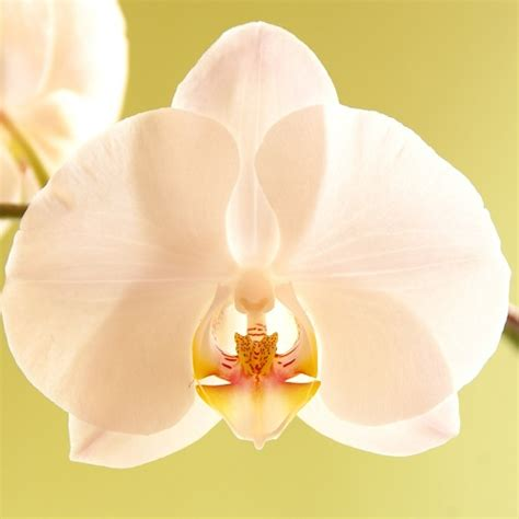 come curare orchidea in vaso come coltivare le orchidee in casa le variet di orchidee