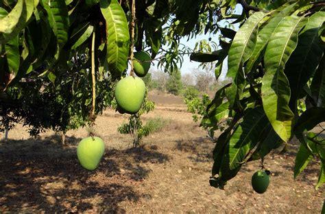 gambar pohon menanam bunga kebun buah makanan hijau